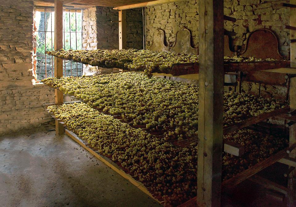 Azienda Vinicola Agricola Forteto della Luja Loazzolo Piemonte Monferrato Autoctoni biologici