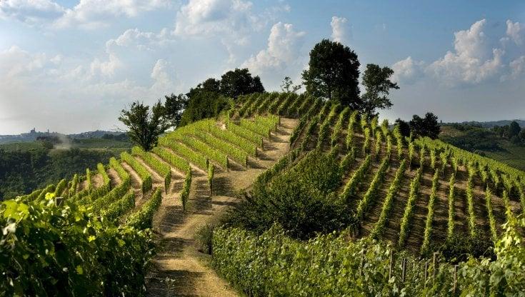 le colline coi filari di vigne del Roero in Piemonte vino Arneis e Nebbiolo purezza Winelovers.shop